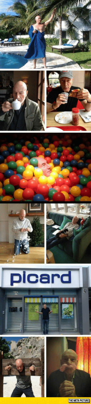 Tumblr, Blog, and Http: picard  Jours  THE META PICTURE srsfunny:Just Patrick Stewart Being Awesome, Like He Only Knows