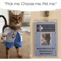 "Memes, Grey, and Hospital: ""Pick me. Choose me. Pet me.""  GREY SLOAN  MEMORIAL  HOSPITAL  Meow-edith Grey, M.D.  General Surgeon  3281-PURR-01  13 😂😍"