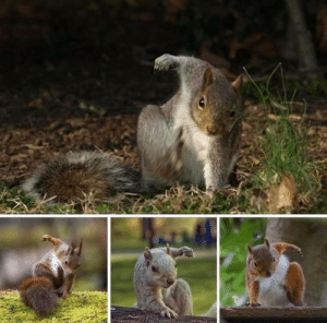 Pics of squirrels landing on the ground(Source): Pics of squirrels landing on the ground(Source)