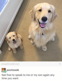 Dogs, Meme, and Memes: picsgold tumblr.com  pochowek  feel free to speak to me or my son again any  time you want Old meme but very happy meme so here u go
