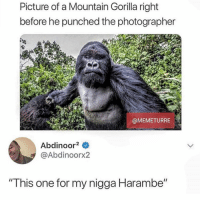"""Lmao, Memes, and My Nigga: Picture of a Mountain Gorilla right  before he punched the photographer  @MEMETURRE  Abdinoor2  @Abdinoorx2  """"This one for my nigga Harambe"""" LMAO @thehoodtube"""