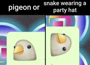 what do you say?: pigeon or hake wearing a  party hat what do you say?