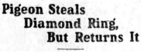 "Tumblr, Blog, and California: Pigeon Steals  Diamond Ring,  But Returns It <p><a href=""http://yesterdays-print.com/post/161645398989/oakland-tribune-california-september-25-1912"" class=""tumblr_blog"">yesterdaysprint</a>:</p><blockquote><p> Oakland Tribune, California, September 25, 1912<br/></p></blockquote>"