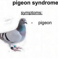 pigeon: pigeon syndrome  symptoms:  pigeon