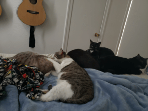 Pile o' sleepy cats (from left to right: Lovely, Roo/Roocifer, Tumnus is one bundle, Waffles is the one who looks really unimpressed with me, and Yumi).: Pile o' sleepy cats (from left to right: Lovely, Roo/Roocifer, Tumnus is one bundle, Waffles is the one who looks really unimpressed with me, and Yumi).