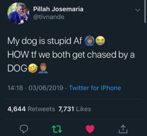I haven't laughed this hard in a long time: Pillah Josemaria  @tivnande  My dog is stupid Af  HOW tf we both get chased by a  DOG  14:18 03/06/2019 Twitter for iPhone  4,644 Retweets 7,731 Likes I haven't laughed this hard in a long time