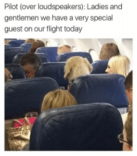 Funny, Flight, and Tank: Pilot (over loudspeakers): Ladies and  gentlemen we have a very special  guest on our flight today OMG OMG (follow @tank.sinatra if ur not already)