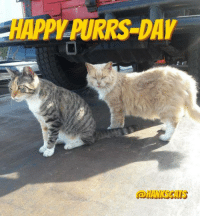 PILPURRS DAY Happy Friday Eve lovely friends!  We <3 you all!!