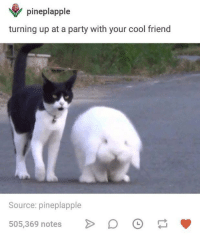Party, Cool, and Humans of Tumblr: pineplapple  turning up at a party with your cool friend  Source: pineplapple  505,369 notes D