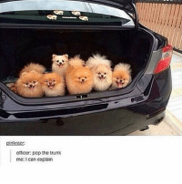 Follow us for more funny tumblr & textposts!!: pinkraz  Officer: pop the trunk  me: can explain Follow us for more funny tumblr & textposts!!