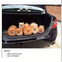 Follow for more funny tumblr and textposts!!: pinkrazr  officer: pop the trunk  me: can explain Follow for more funny tumblr and textposts!!