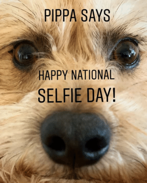 """Click, Memes, and Selfie: PIPPA SAYS  HAPPY NATIONAL  SELFIE DAY! Pippa says, """"Happy National Selfie Day!""""  She also says #VoteforJeanie 😊 Click the link in bio to vote for Pippa's sister Jeanie! #two3leggeddogs #nationalselfieday #selfie"""