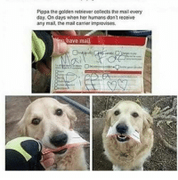Click here if you want HELLA cute animals. #Dogs #Cats #Cute #Adorable #AnimalMemes: Pippa the golden retriever collects the mail every  day. On days when her humans don't receive  any mail, the mail carrier improvises.  have mai Click here if you want HELLA cute animals. #Dogs #Cats #Cute #Adorable #AnimalMemes