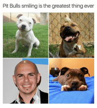 Memes, Bulls, and Live: Pit Bulls smiling is the greatest thing ever Pit bulls are the reason I live | 👉 @stuffthatlookslikestuff is a must follow DALE