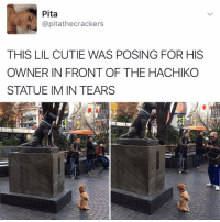 Drake, Kardashians, and Memes: Pita  apitathecrackers  THIS LIL CUTIE WAS POSING FOR HIS  OWNER IN FRONT OF THE HACHIKO  STATUE IM IN TEARS 😂😂lol -(rp @kalesalad - - - - 420 memesdaily Relatable dank MarchMadness HoodJokes Hilarious Comedy HoodHumor ZeroChill Jokes Funny KanyeWest KimKardashian litasf KylieJenner JustinBieber Squad Crazy Omg Accurate Kardashians Epic bieber Weed TagSomeone hiphop trump ovo drake