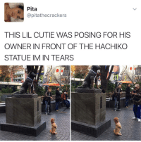 Funny, Cracker, and Hachiko: Pita  @pitathe crackers  THIS LIL CUTIE WAS POSING FOR HIS  OWNER IN FRONT OF THE HACHIKO  STATUE IM IN TEARS