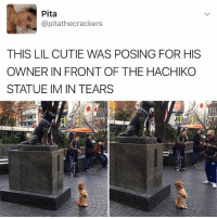 Memes, 🤖, and Doggo: Pita  @pitathecrackers  8)  THIS LIL CUTIE WAS POSING FOR HIS  OWNER IN FRONT OF THE HACHIKO  STATUE IM IN TEARS 😂❤️Cute doggo