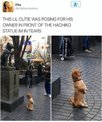 Hachiko, Pita, and Lil: Pita  @pitathecrackers  THIS LIL CUTIE WAS POSING FOR HIS  OWNER IN FRONT OF THE HACHIKO  STATUE IM IN TEARS