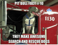 True fact! <3 <3 <3: PITBULL FACT #10  1130  THEY MAKE AWESOME  SEARCH AND RESCUE DOGS True fact! <3 <3 <3