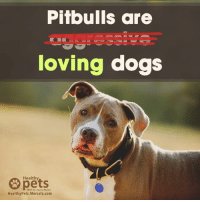 Stop discrimination! ✖️: Pitbulls are  loving dogs  Healthy  With Dr. Karen Becker  HealthyPets.Mercola.com Stop discrimination! ✖️