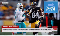 PITTSBURGH, PA  1:16 PM ET  PeTA  BREAKING NEWS  ONFL MEMES  PETA TO INVESTIGATE BRUTAL KILLING OF 53 DOLPHINS IN PITTSBURGH CNN  NAS  WOLF Another one bites the dust  #OrangeCrush