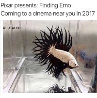 Emo, Memes, and Pixar: Pixar presents: Finding Emo  Coming to a cinema near you in 2017  @LUTALO8 My creativity is running low so here's some of my old memes 😁 (swipe for more)
