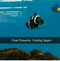 Memes, Pixar, and Fish: Pixar Presents: Finding Negro The most powerful fish via /r/memes http://bit.ly/2TsFqZ4