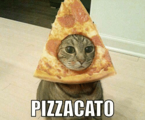 chrispalmermusic:  Pizza + cat = any string player's dream: PIZZACATO chrispalmermusic:  Pizza + cat = any string player's dream