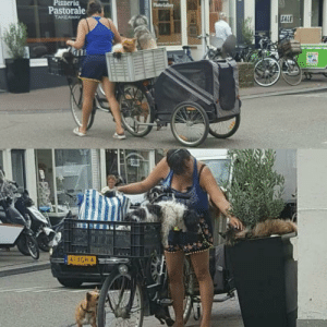 Amsterdam- Crazy dog lady and her friends meeting a rare plant cat: Pizzeria  Phuto Gallery  Pastorale  TAKEAWAY  | GALE  41XGH 4 Amsterdam- Crazy dog lady and her friends meeting a rare plant cat