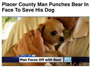 owson: gaydicks420:  every time i see this post i kinda wanna cry? look at how little that dog is. its so small. it was so defenseless and that dude fucking punched a bear to save it. does that dog know? does it know how loved it is? i want someone to love me that much. i want to be that small.  i agree with gay dicks 420 : Placer County Man Punches Bear In  Face To Save His Dog   ONLY ON O13  Man Faces Off with Bear O13 owson: gaydicks420:  every time i see this post i kinda wanna cry? look at how little that dog is. its so small. it was so defenseless and that dude fucking punched a bear to save it. does that dog know? does it know how loved it is? i want someone to love me that much. i want to be that small.  i agree with gay dicks 420