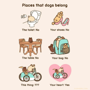 Dank, Dogs, and Shoes: Places that dogs belong  C3  The toilet: No  Your shoes: No  The table: No  Your bag: No  This thing: ???  Your heart: Yes 🐶🚫🚽 #AprilFoolsDay