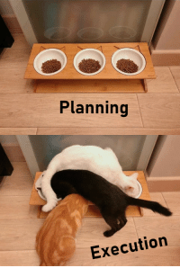 Planning, Execution, and Multi: Planning  Execution Multi threading