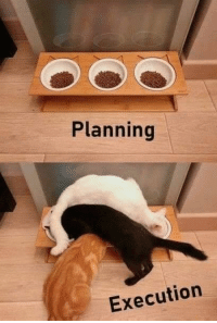 Life, Story of My Life, and Story: Planning  Execution Story of my life