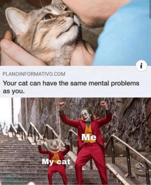 meirl: PLANOINFORMATIVO.COM  Your cat can have the same mental problems  as you.  Me  My cat meirl