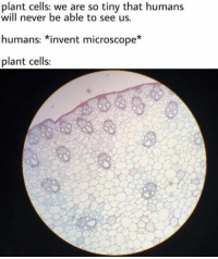 Memes, Science, and Never: plant cells: we are so tiny that humans  will never be able to see us.  humans: *invent microscope*  plant cells: Join our group: Science Memes  (Credit to Hafsa Ab)