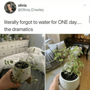 Plant people are certainly their own special breed! #Memes #Plants #Entertainment: Plant people are certainly their own special breed! #Memes #Plants #Entertainment