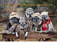 One of Mom's favorite pictures...featuring Riley Steven, Maddie Kathryn, Oliver james, Zoe Elizabeth and Clara Francis <3 <3 <3 Not only is it one of our NEW Thanksgiving cards...it's also the picture for our November 2017 calendar!!!  https://www.etsy.com/listing/475546888/funny-thanksgiving-card-pug-card-plant?ref=shop_home_active_1: Plant Smiles. Grow Giggles. Harvest Love  pu8s and kisses One of Mom's favorite pictures...featuring Riley Steven, Maddie Kathryn, Oliver james, Zoe Elizabeth and Clara Francis <3 <3 <3 Not only is it one of our NEW Thanksgiving cards...it's also the picture for our November 2017 calendar!!!  https://www.etsy.com/listing/475546888/funny-thanksgiving-card-pug-card-plant?ref=shop_home_active_1