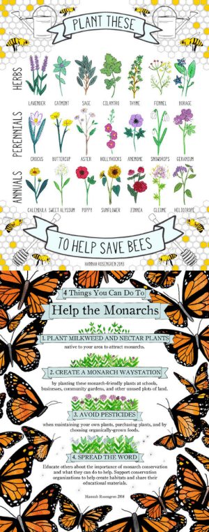 Community, Target, and Tumblr: PLANT THES  LAVENDER CATMINT SAGE CILANTRO THYME FENNEL BORAGE  CROCUS BUTTERCUP ASTER HOLLYHOCKS ANEMONE SNOWDROPS GERANIUM  CALENDULA SWEET ALYSSUM POPPY SUNFLOWER ZINNIA CLEOME,︿HELIOTROPLI  0 HELP SAVE BEES  HANNAH ROSENGREN 2013   4 Things You Can Do To  Help the Monarchs  1. PLANT MILKWEED AND NECTAR PLANTS  native to your area to attract monarchs.  2. CREATE A MONARCH WAYSTATION  by planting these monarch-friendly plants at schools,  businesses, community gardens, and other unused plots of land.  3. AVOID PESTICIDES  when maintaining your own plants, purchasing plants, and by  choosing organically-grown foods.  4. SPREAD THE WORD  Educate others about the importance of monarch conservation  and what they can do to help. Support conservation  organizations to help create habitats and share their  educational materials.  Hannah Rosengren 2014 hannah-rosengren:  Spring is officially here! When planting for pollinators, remember to choose non-treated seeds and keep your garden pesticide-free.