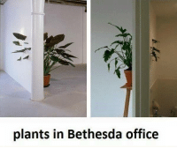 Memes, Office, and Bethesda Office: plants in Bethesda office Share your best glitches below! -MacCready