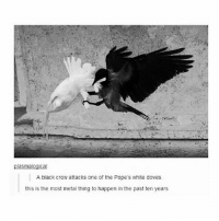 current mood: Every Dragonforce song - Max textpost textposts: plasmalogical  A black crow attacks one of the Pope's white doves.  this is the most metal thing to happen in the past ten years current mood: Every Dragonforce song - Max textpost textposts