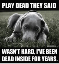 PLAY DEAD THEY SAID  DARK HUMOR  WASNTHARD, IVE BEEN  DEAD INSIDE FOR YEARS.