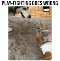 Memes, Bible, and 🤖: PLAY-FIGHTING GOES WRONG  LAD  BIBLE No not THAT kind of play-fighting 😳😂 @sugarbearthebully and @luna_b.k