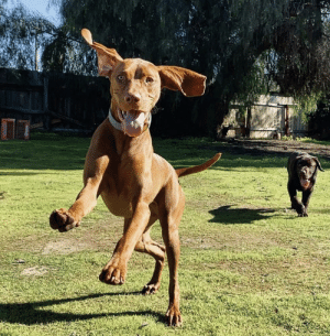 Playing tag with my bestie!! Catch me if you can!!: Playing tag with my bestie!! Catch me if you can!!