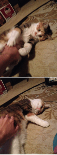 Time, She, and Rub: Playtime vs. Rub time. She couldn't decide.
