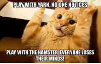 Tumblr, Blog, and Hamster: PLAYWITH YARN, NO ONE NOTICES  PLAY WITH THE HAMSTER, EVERYONE LOSES srsfunny:  Sometimes Humans Overreact Over Nothing