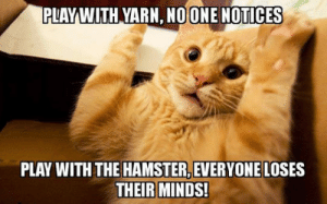 Tumblr, Blog, and Hamster: PLAYWITH YARN, NO ONE NOTICES  PLAY WITH THE HAMSTER, EVERYONE LOSES srsfunny:Sometimes Humans Overreact Over Nothing