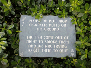 Funny, Saw, and Bahamas: PLEAS DO MOT DROP  CIGARETTE BUTTS On  THE GROUND  THE FISH COME OUT AT  NIGHT TO SMOKE THEM  AND WE ARE TRVING  TO GET THEM TO QUIT This sign I saw in the Bahamas via /r/funny https://ift.tt/2xFTJAt