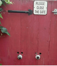 Gate, The Gate, and Please: PLEASE  CLOSE  THE GATE