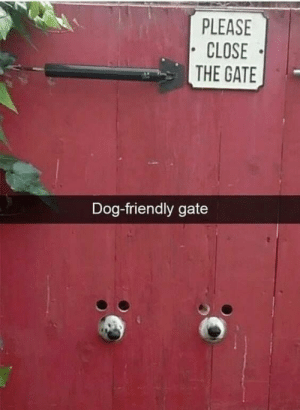 Animals, Dogs, and Memes: PLEASE  CLOSE  THE GATE  Dog-friendly gate Dog Memes Of The Day 32 Pics – Ep28 #dogs #dogmemes #memes#lovelyanimalsworld - Lovely Animals World