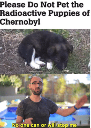 Puppies, Chernobyl, and Can: Please Do Not Pet the  Radioactive Puppies of  Chernobyl  No one can or will stop me I will do it no matter what